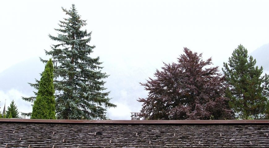 What is the Best Gutter Guards for Pine Needles?